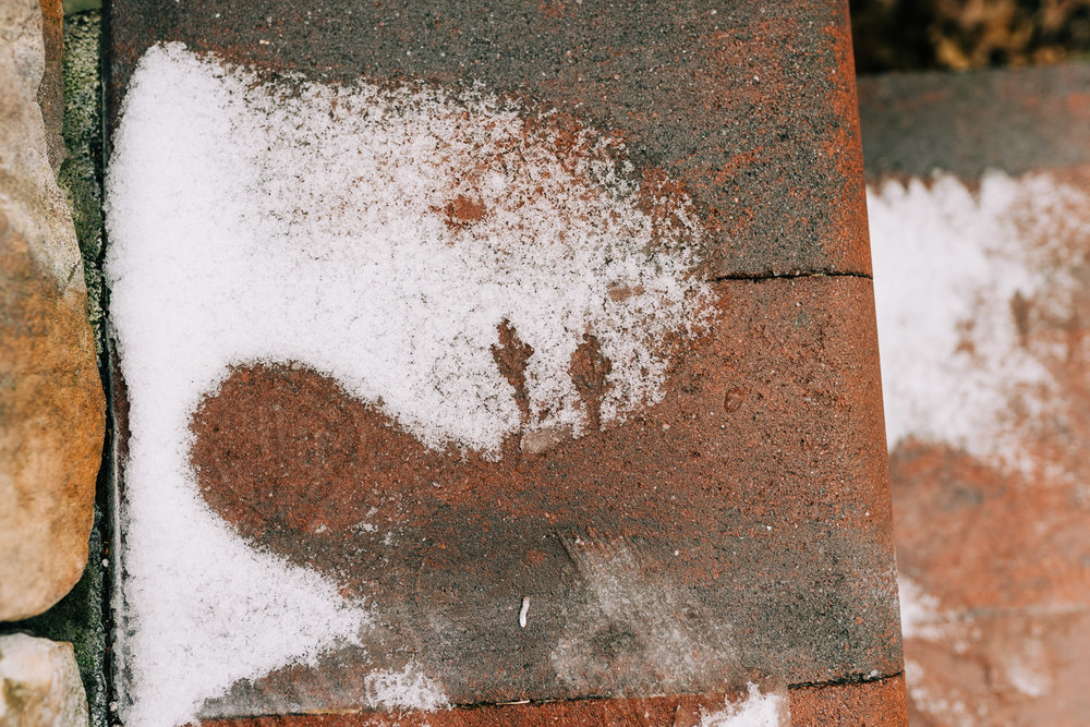 Footprints of a bird in the snow.