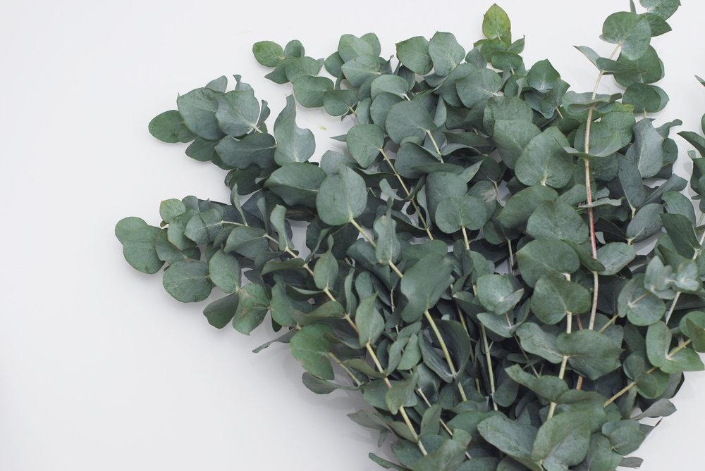 Eucalyptus bouquet.jpg