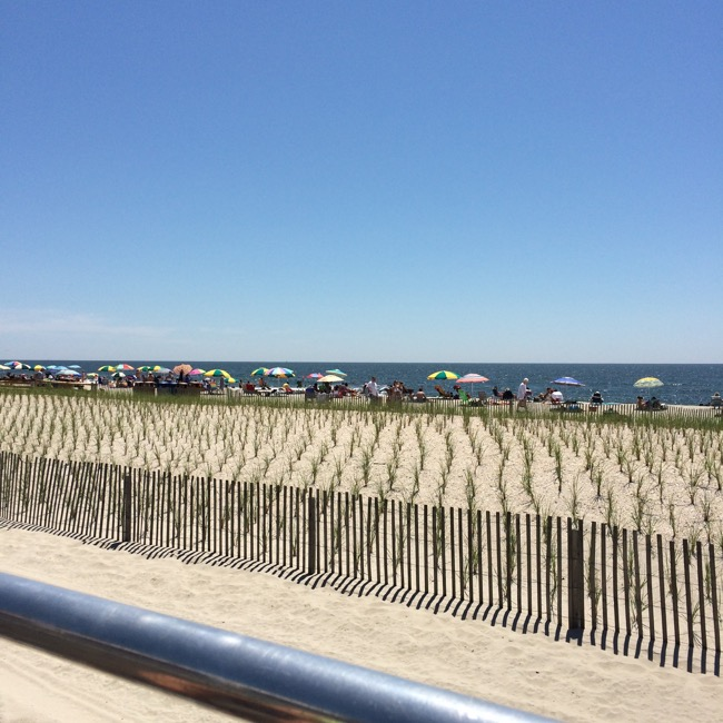 Dune grass had to be planted after the beach was completely rebuilt following Hurricane Sandy in 2013
