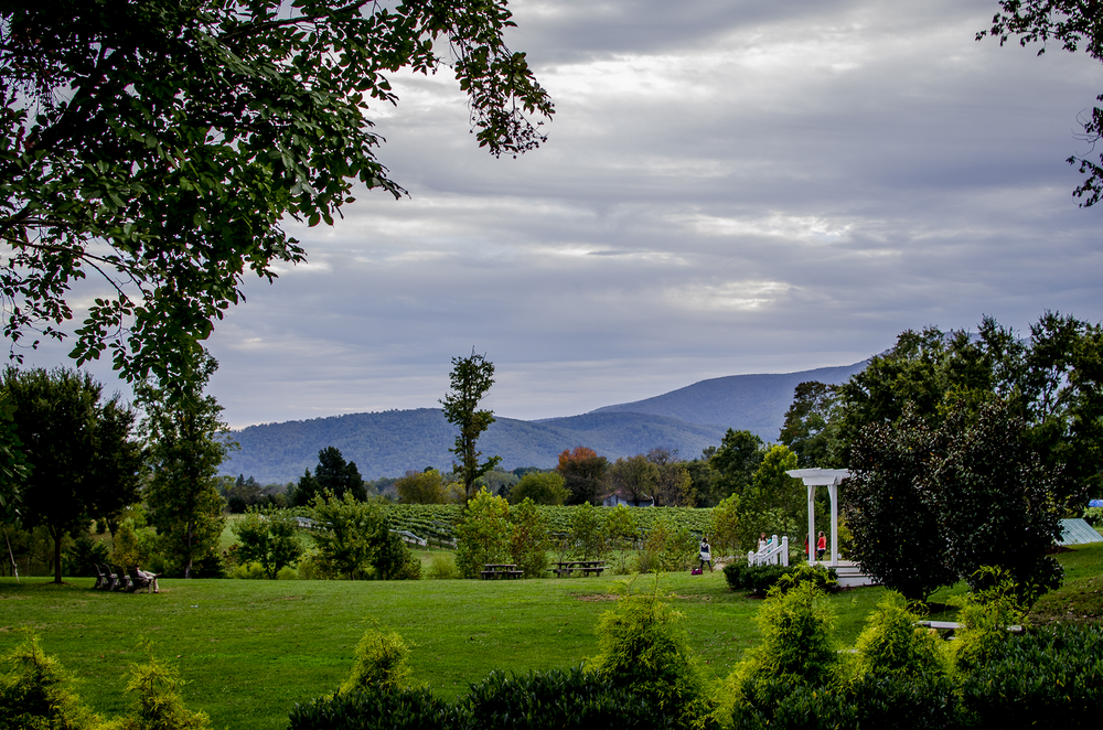 Veritas Vineyard in Charlottesville, Virginia