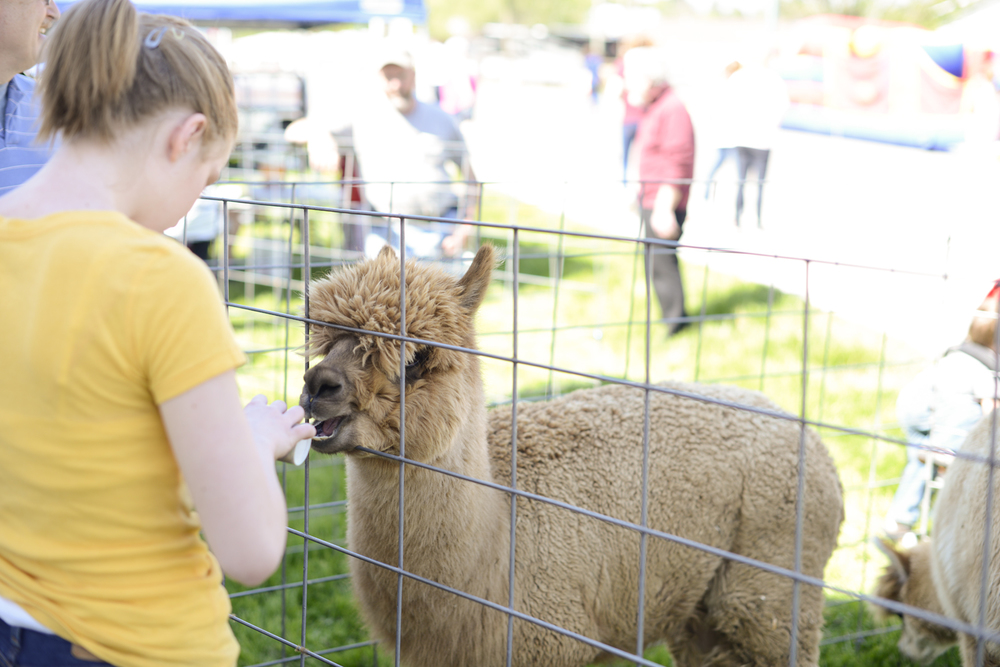 Vinton Dogwood Festival in April 2014 | Maria Grace Photography