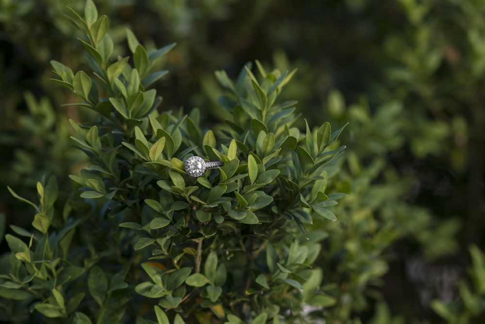 Stunning ring shot in the bushes | Maria Grace Photography