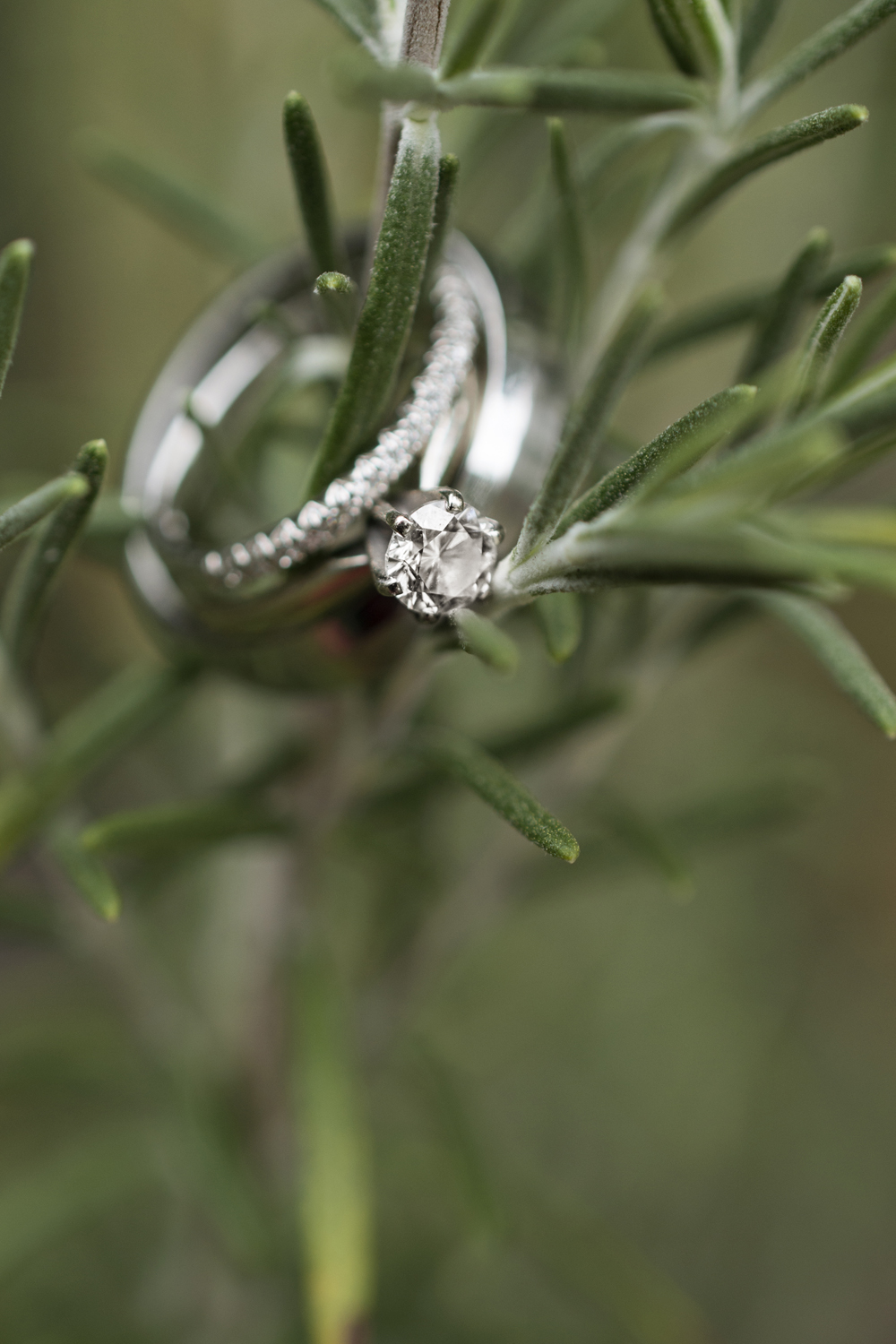 Wedding rings on a fern