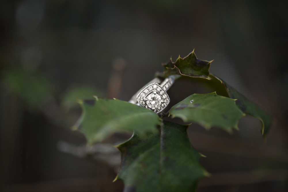 Ring shot on ivy leaves