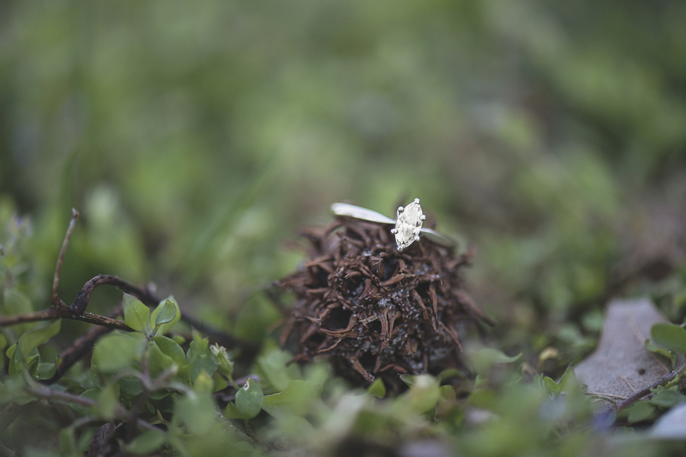 Spring ring shot in nature | Macro photography