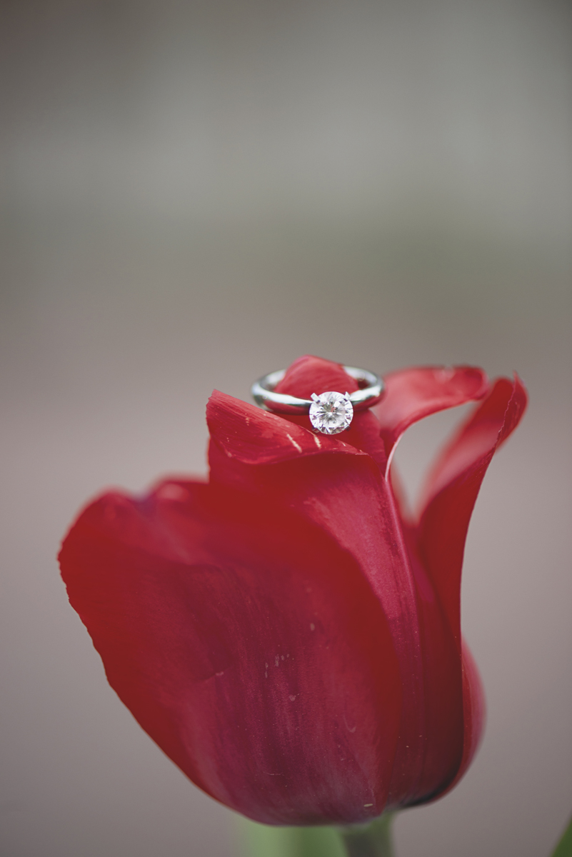 Ring shot on a red tulip | Macro photography | Engagement ring
