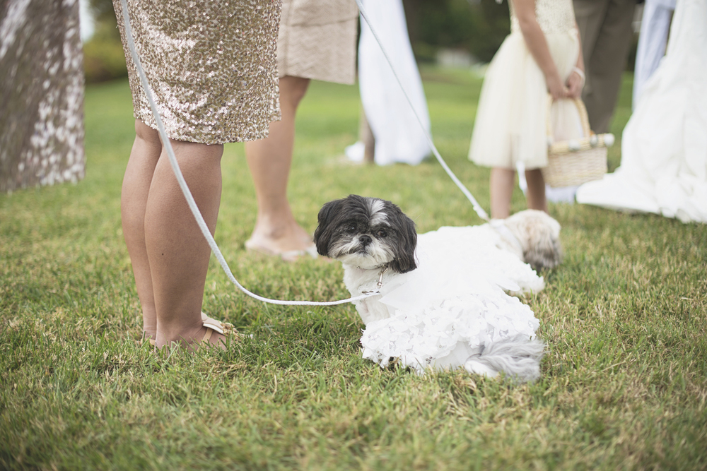Charles City Wedding | Williamsburg Wedding Photographer | Dogs at wedding ceremony