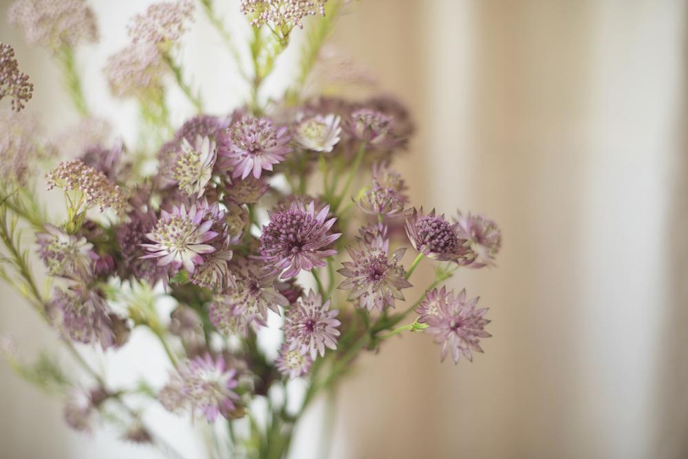 Spring Wedding Flower Suggestions | Astrantia Rosea