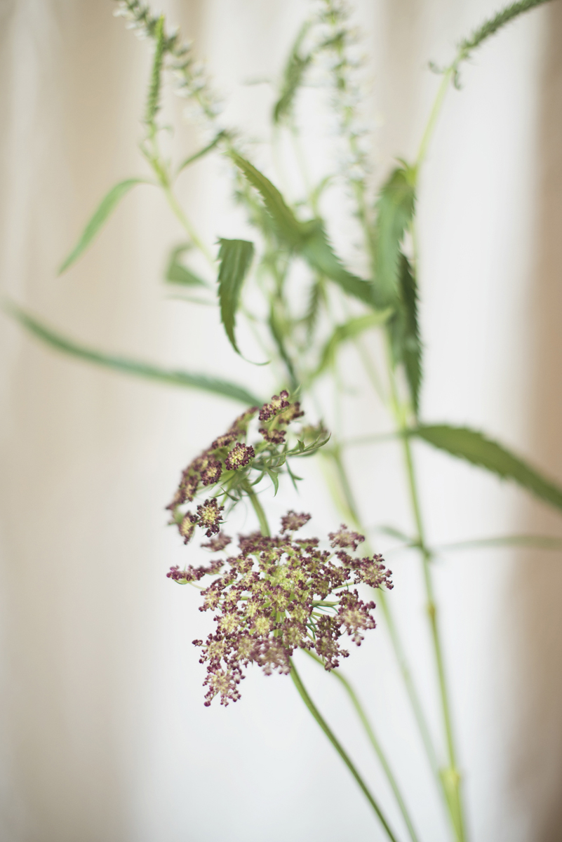 Spring Wedding Flower Suggestions | Chocolate Queen Anne's Lace