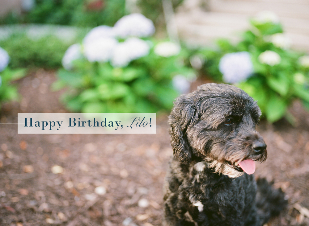 Happy Birthday, Lilo! | Monday Musings