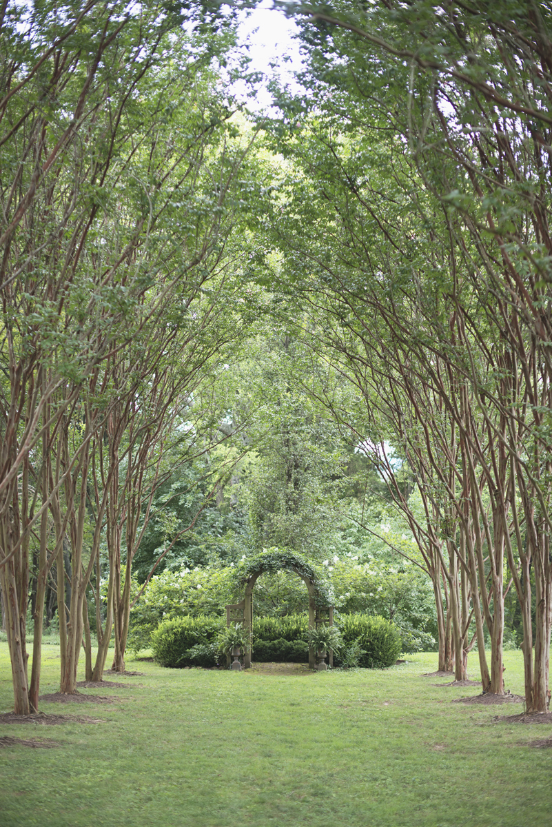Elegant Lavender Plantation Elopement | Outdoor ceremony space with overhanging trees and greenery