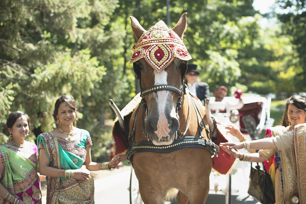 Washington, DC, Indian Wedding with Red and Gold details | Baraat horse