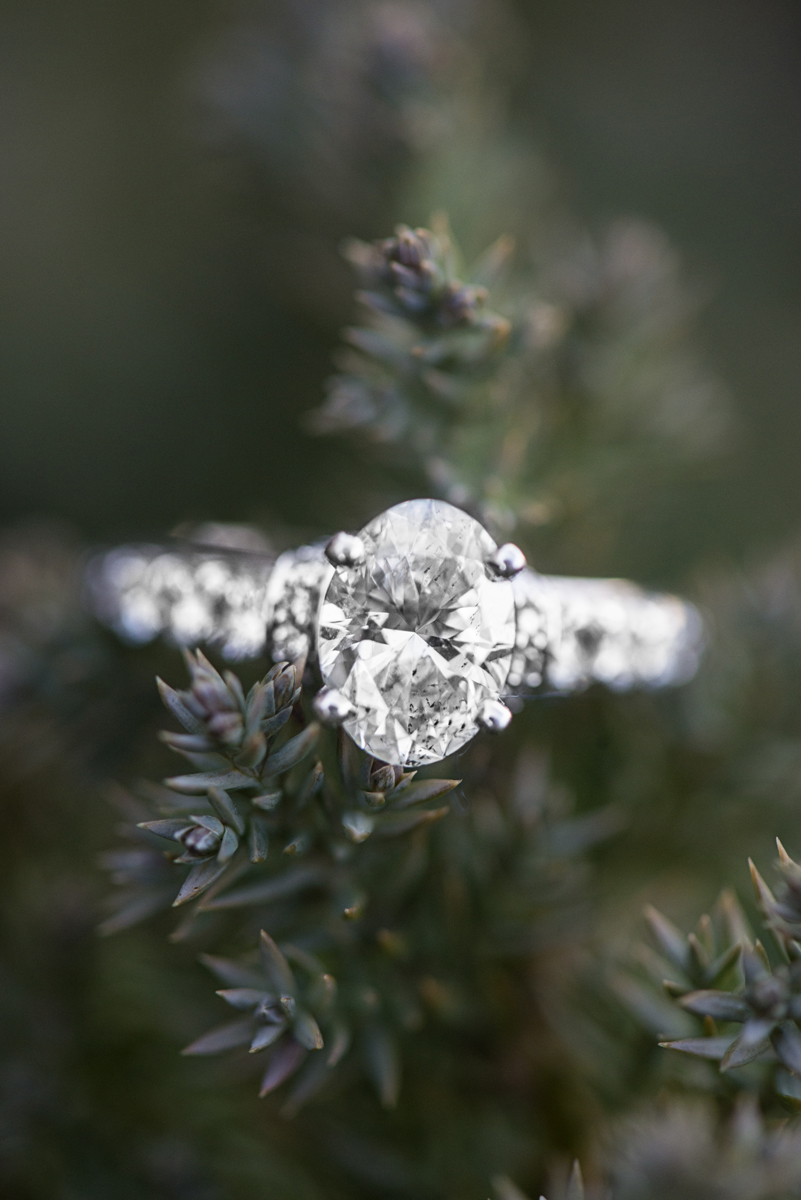 White Gold Evergreen Engagement Ring