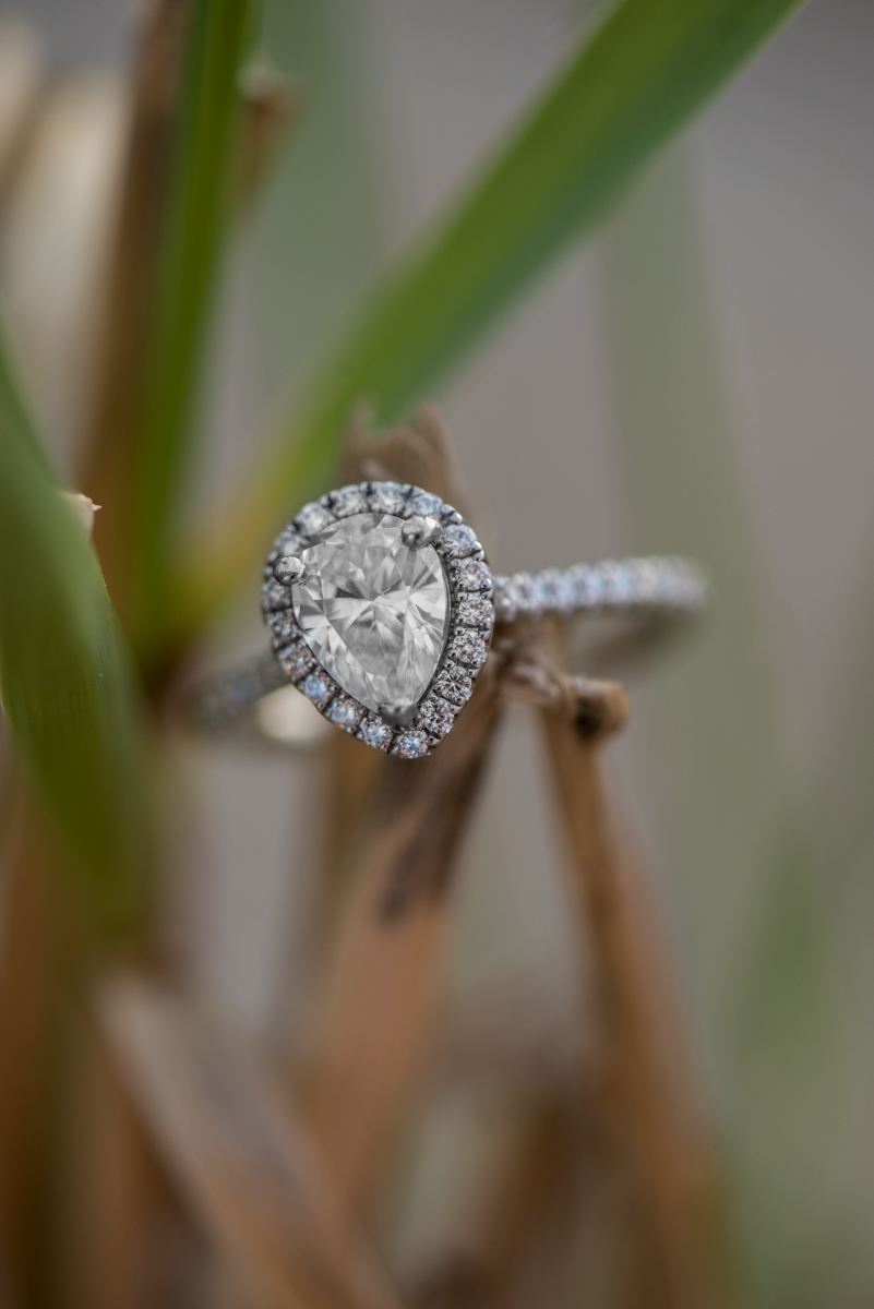 Beach Grass Ring Shot