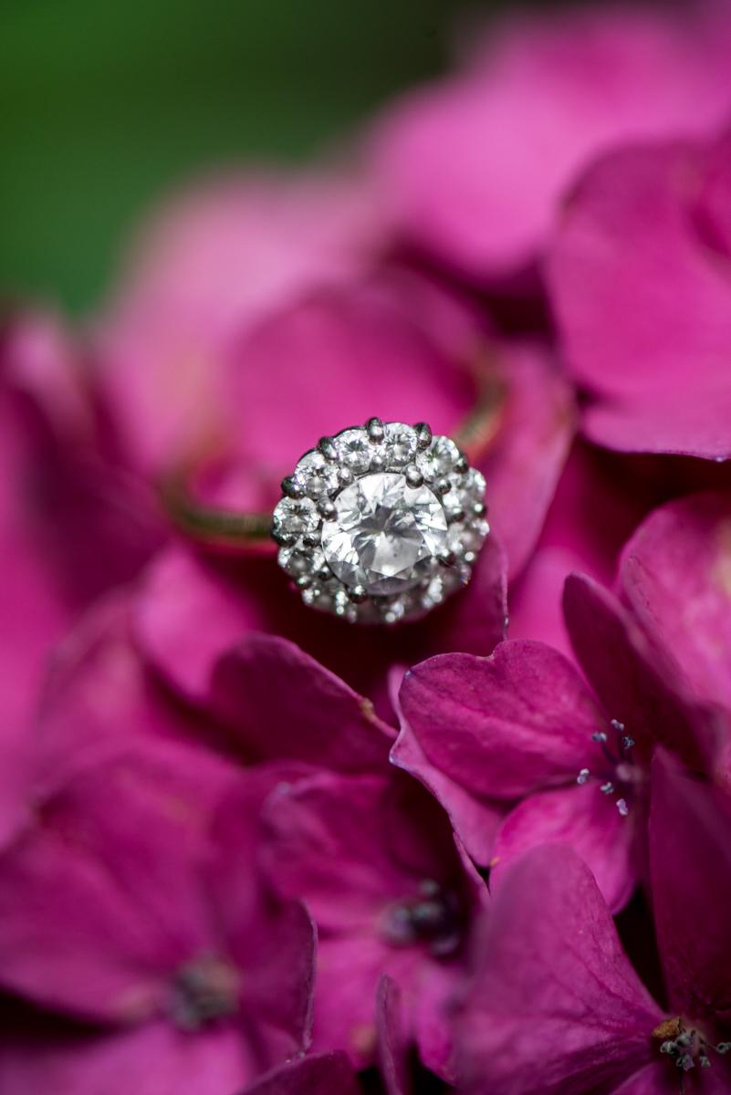 Pink Hydrangea Ring Shot