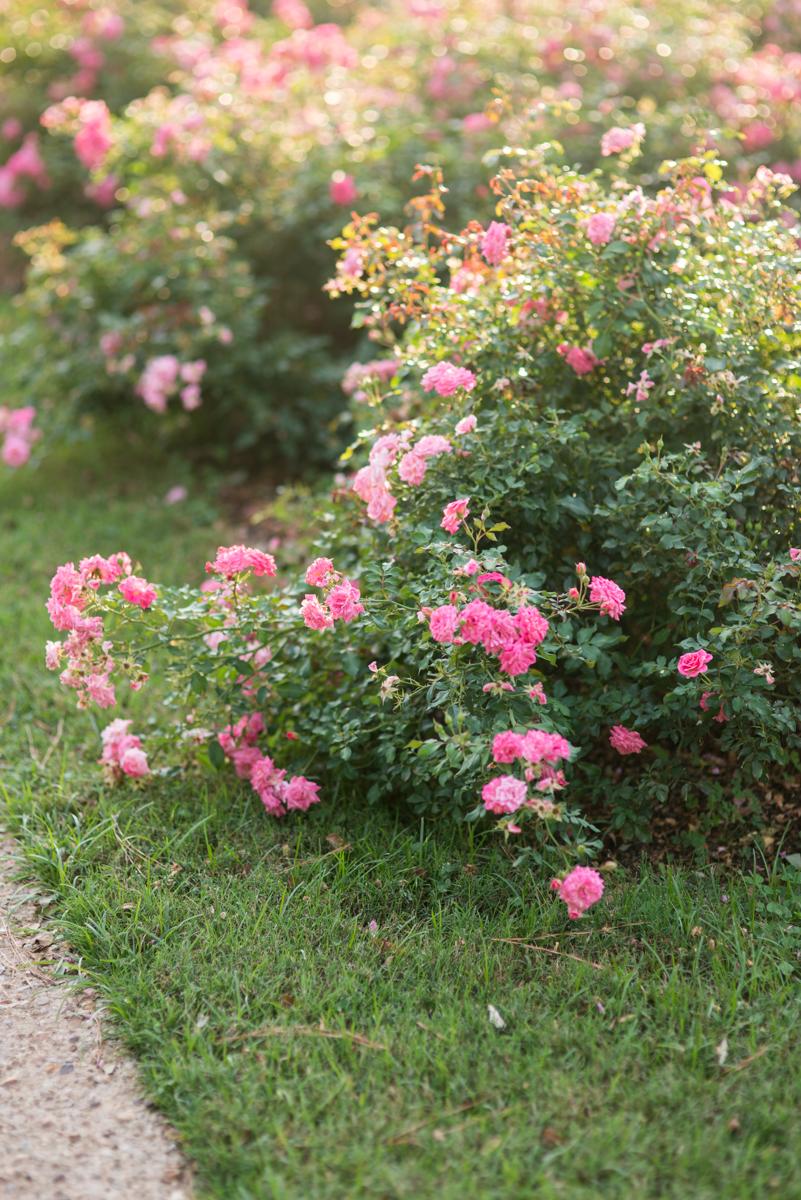 Norfolk_Botanical_Gardens_Bridal_Portraits-7.JPG