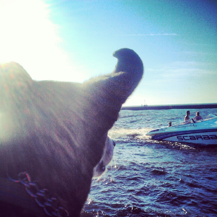 Catching a wave on the pier with the Buddha dog, waiting for the sunset.