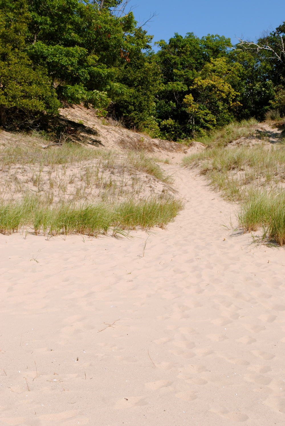 This is the trail to the beach. It's a 1/2 mile from the house. Neat-o.