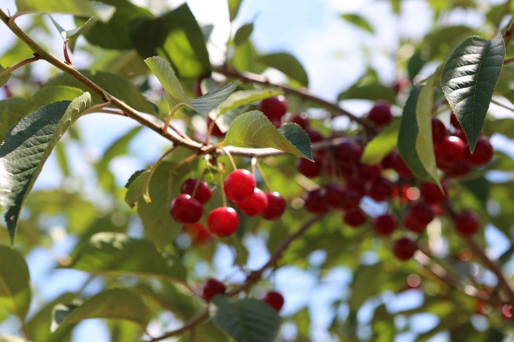 Cherry-79.jpg
