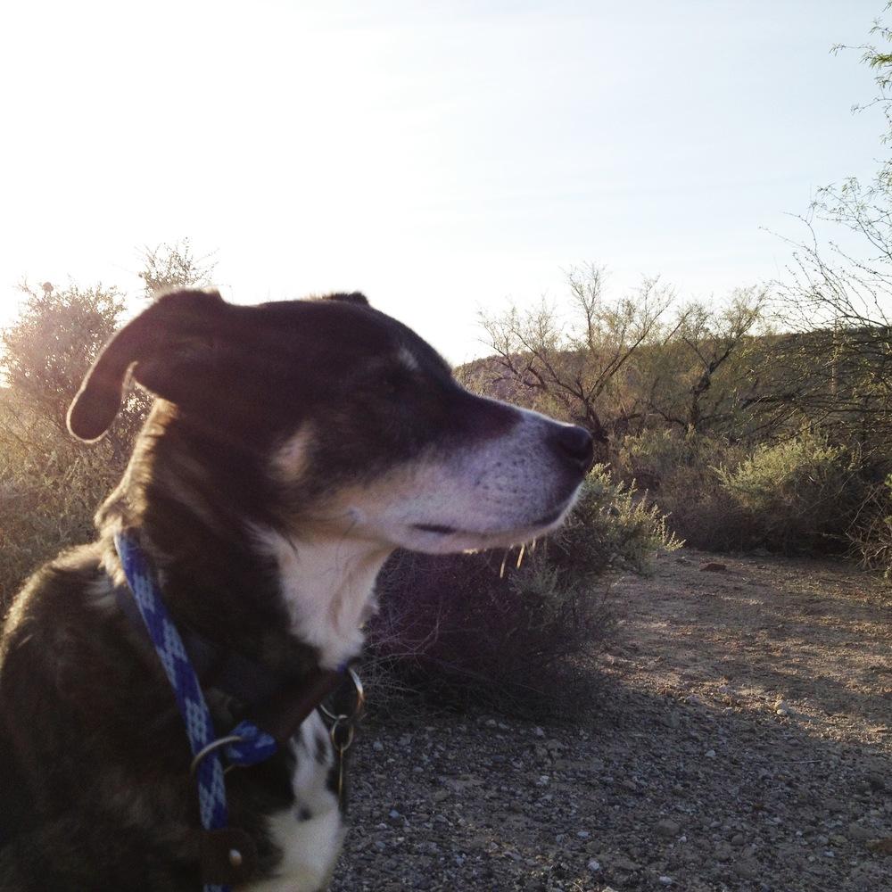 Tasha and the desert.