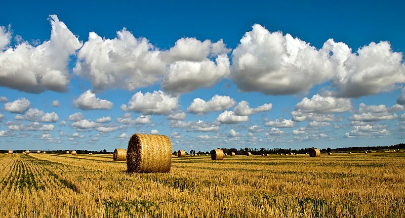 farm-landscape-gotland-sweden.jpg