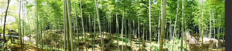 kyoto bamboo forest.jpeg