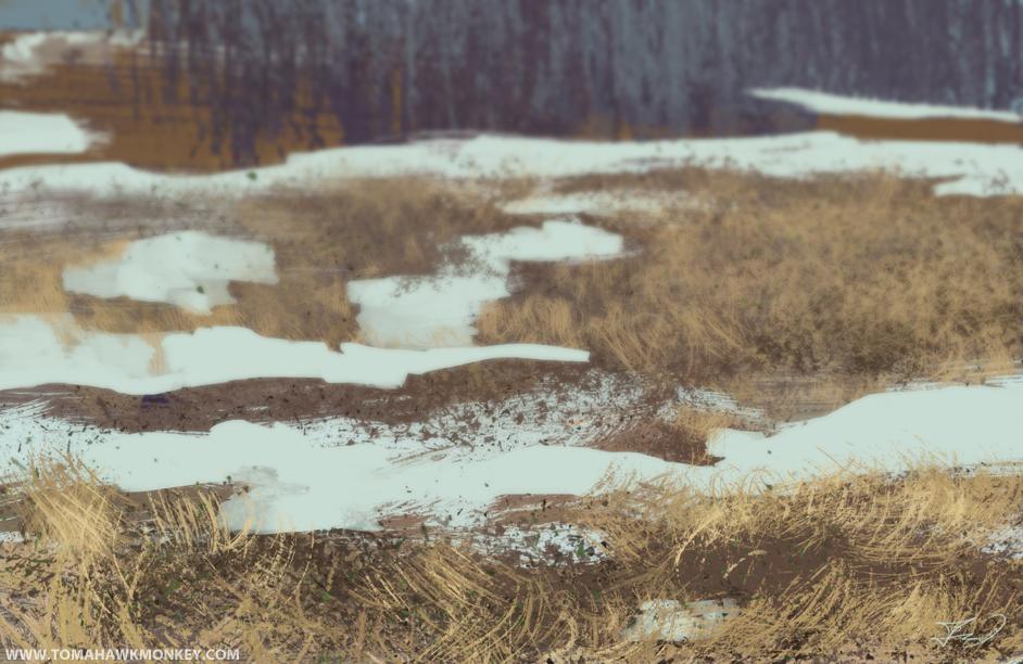 Grass Field.jpg
