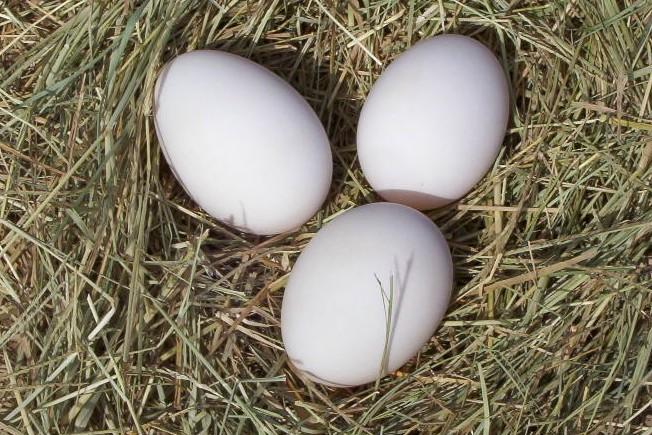 eggs-fresh.jpg