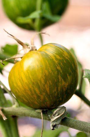 zebra-tomatoes.jpg