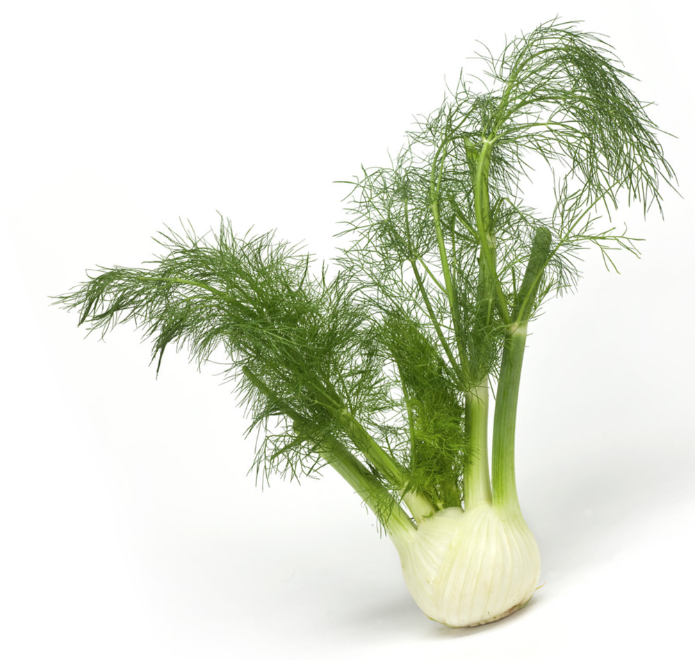 fennel.png