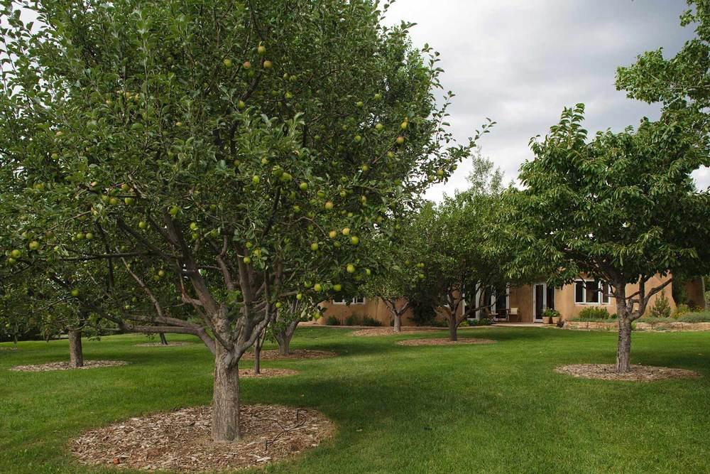 orchard-web.jpg