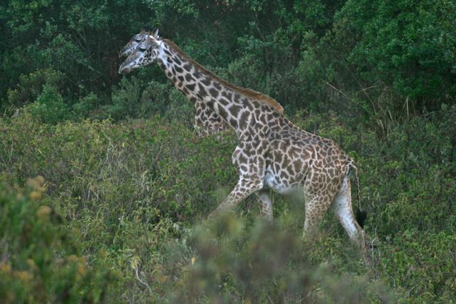 Tanzania 3.jpg