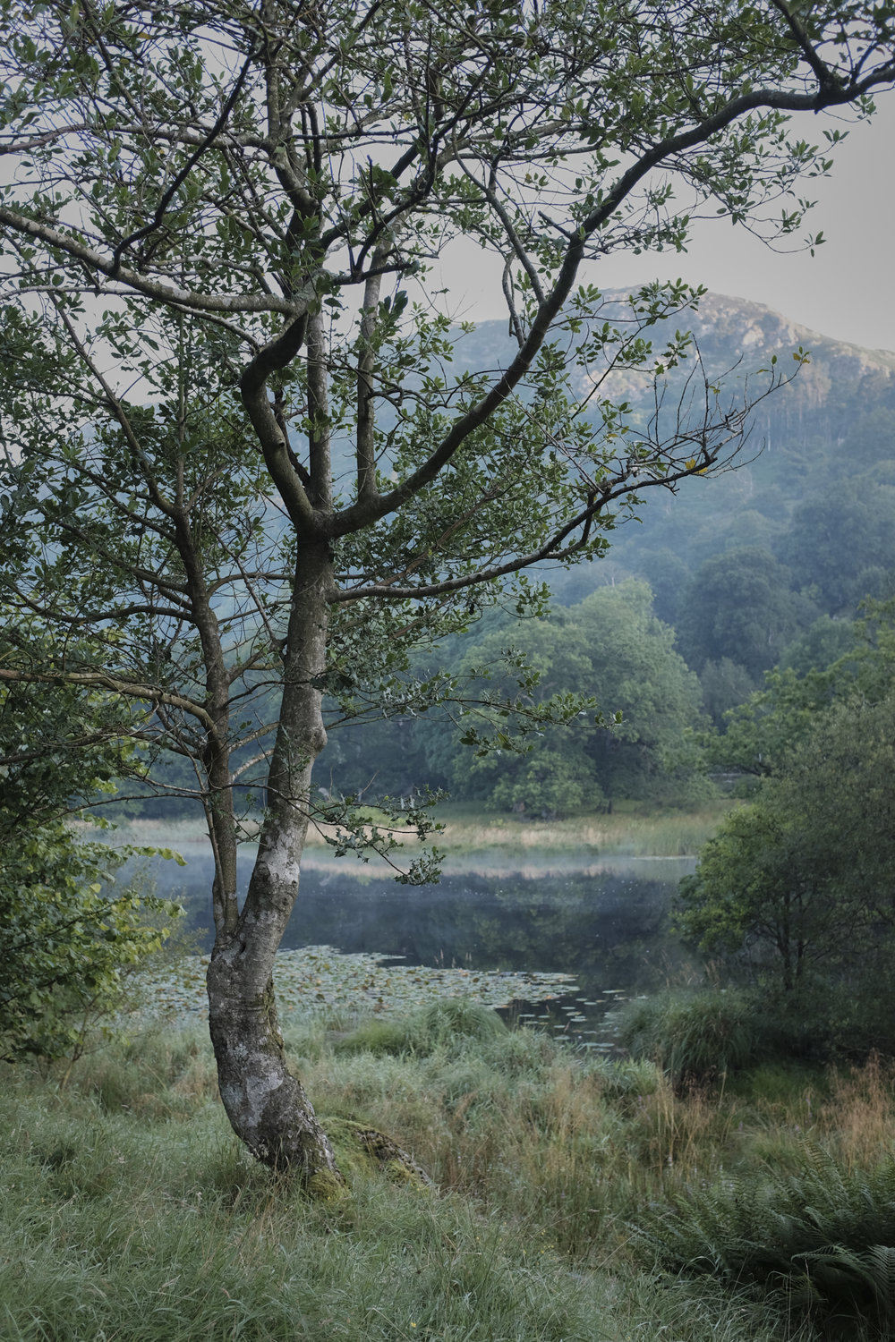 Rydal Water at sunrise on a late summer morning. Click the image for a better view.