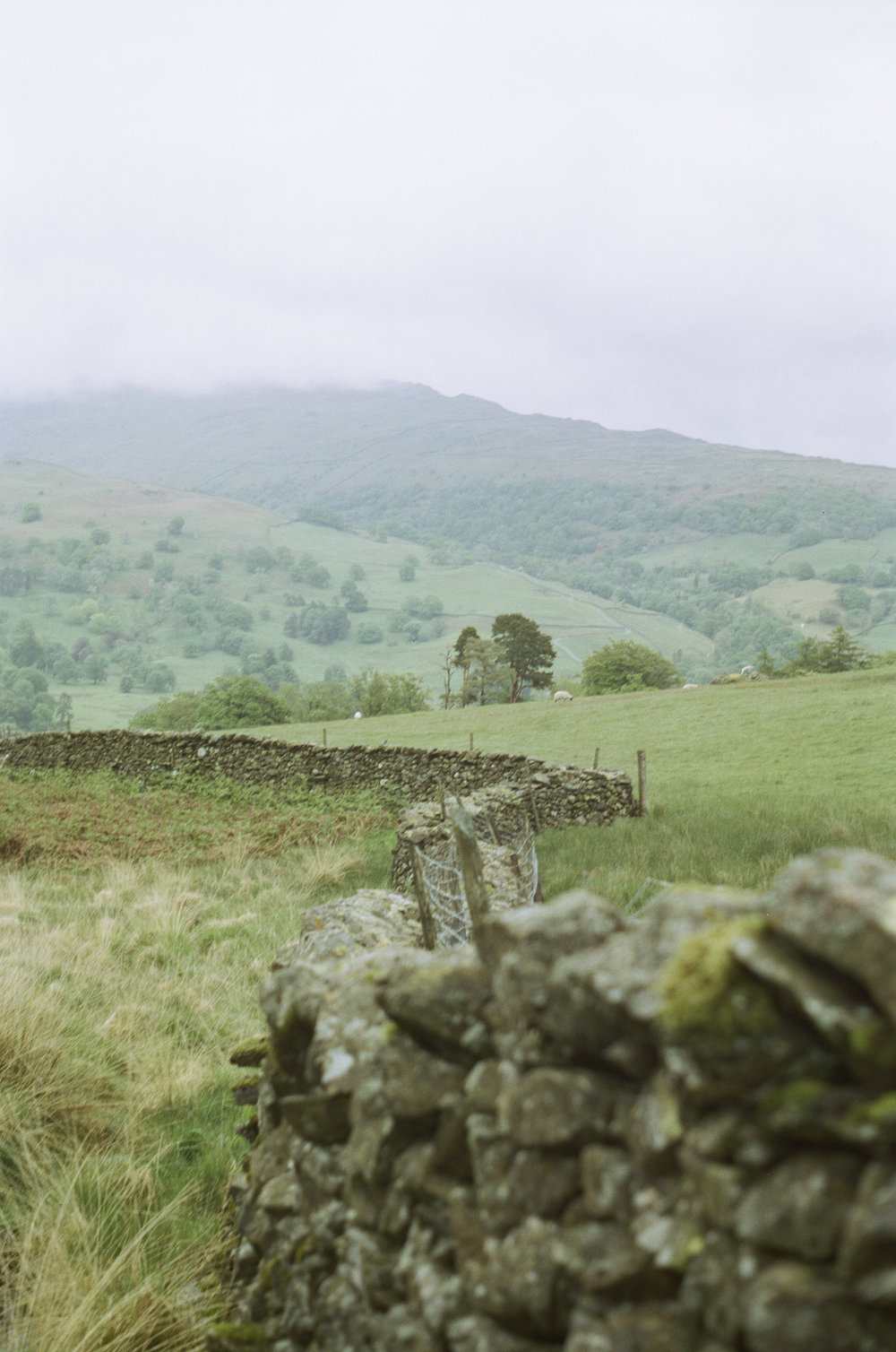 On Loughrigg Fell.