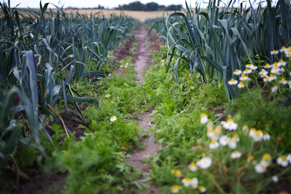 Lancashire Leeks.jpg