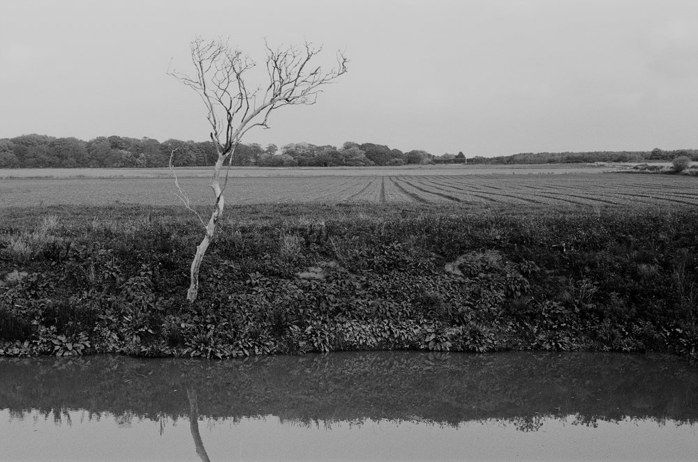 Drainage Pond and Dead Tree, 2018.
