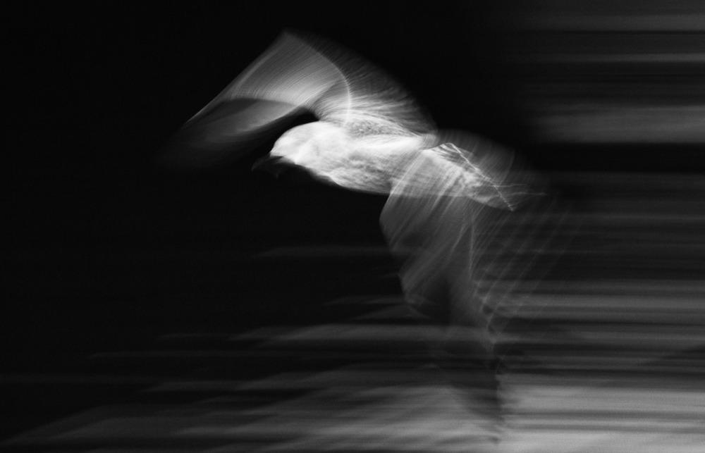 Brian Bennett - Seagull