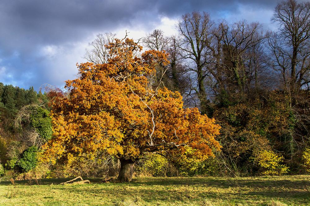 Lagan Tree