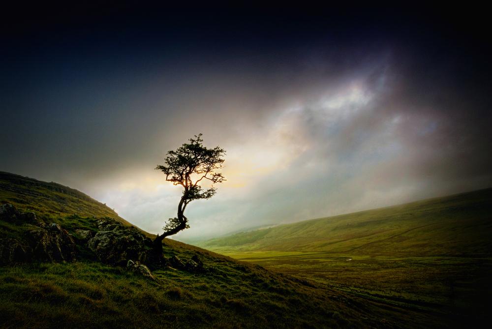 A Dark Tree
