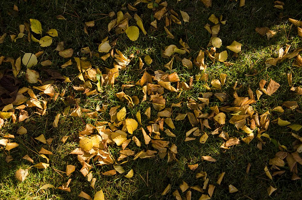 Leaves_Paul McComick_F.jpg