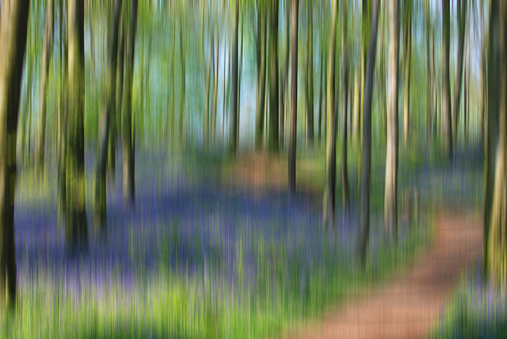 Bluebell Wood, blurred in Photoshop