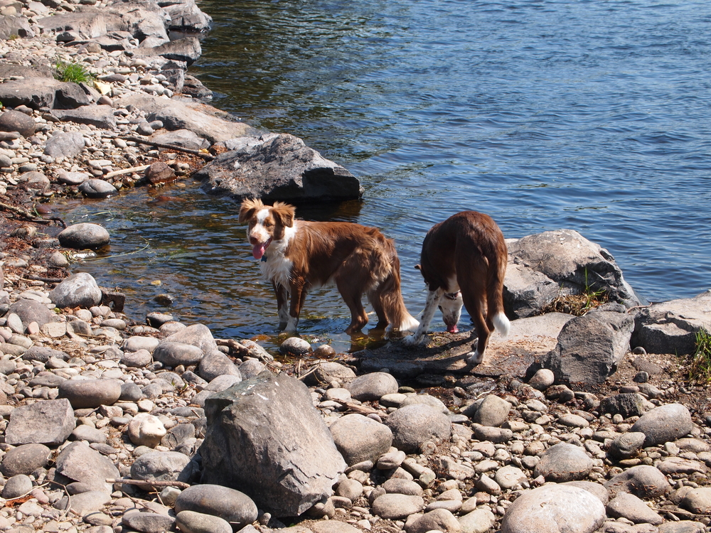 Einstein and Harley at the North Esk