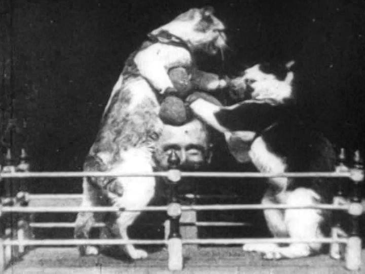 The Boxing Cats.jpg