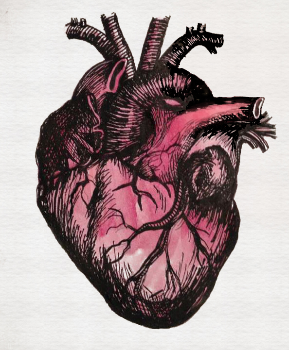 anatomical-heart.jpg
