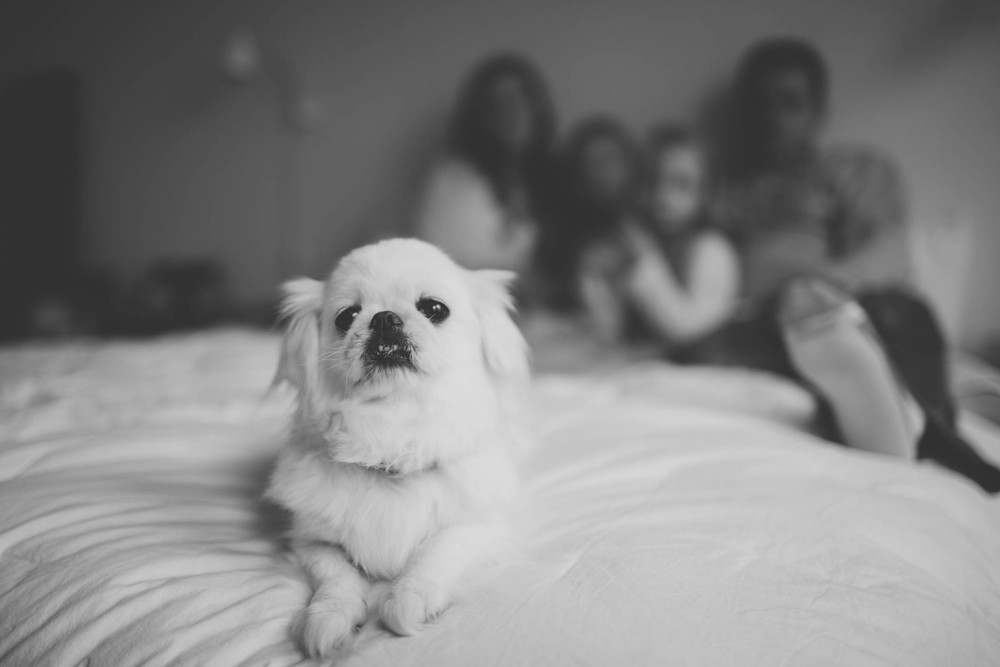 churchill family - alicia white photography-24.jpg