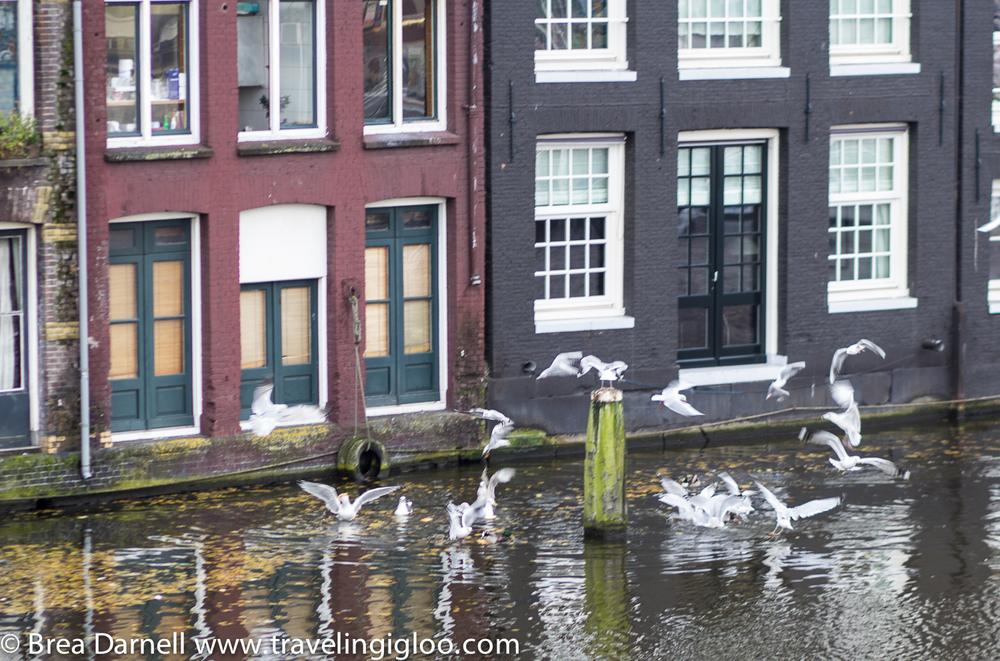 amsterdam-201211162939.jpg