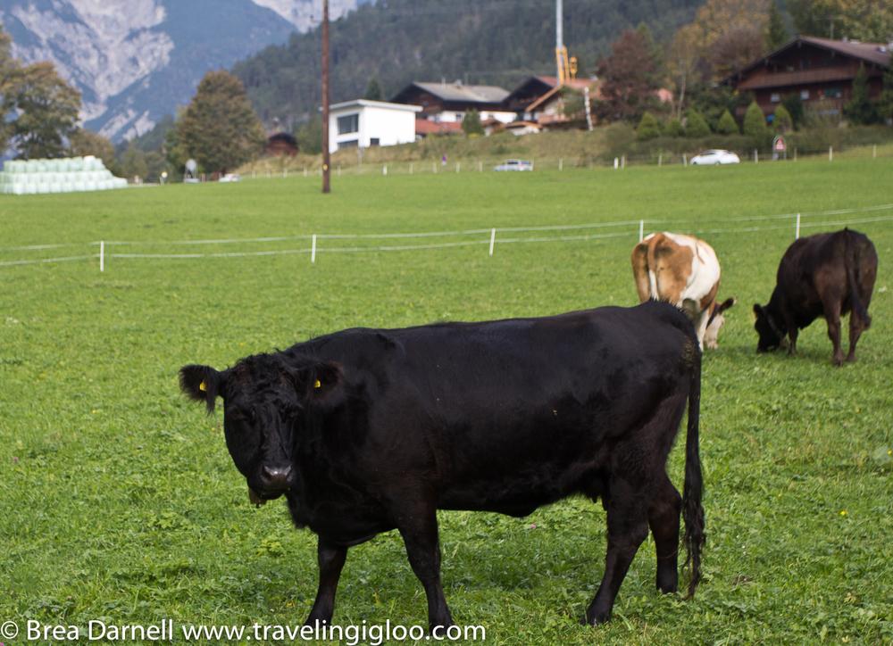Innsbruck-Austria-402012.jpg