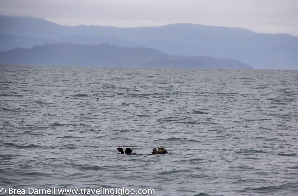 Alaska-Vacation-2011-28.jpg