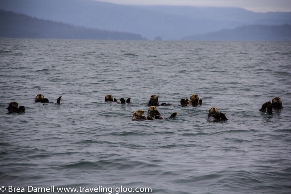 Alaska-Vacation-2011-29.jpg