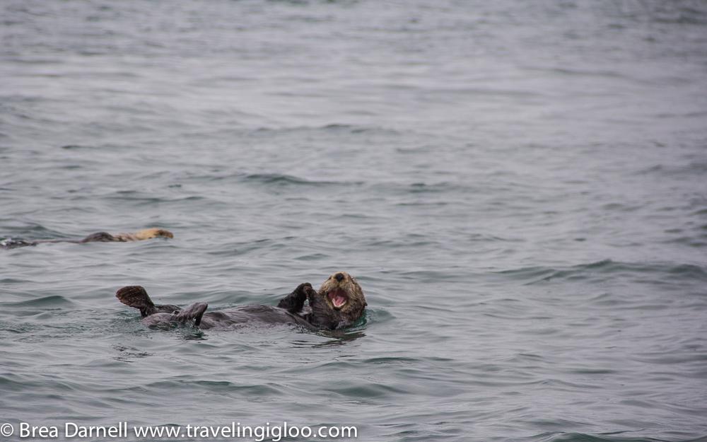 Alaska-Vacation-2011-31.jpg